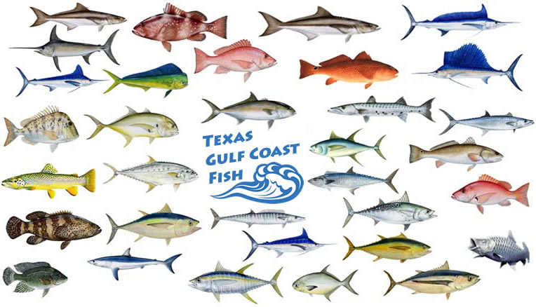 Texas Gulf Coast Fish - Texas Gulf Coast Fishing